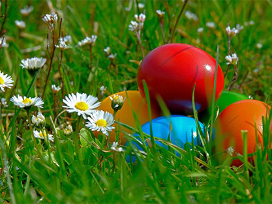 Ta dig an utmaningen Den stora äggjakten